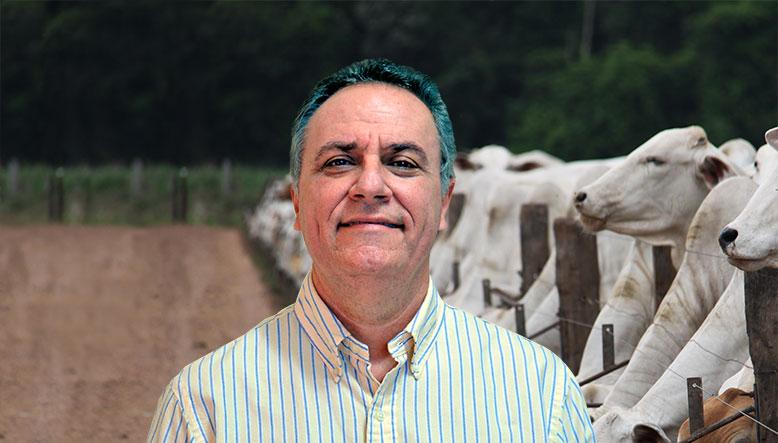curso confinamento de bovinos
